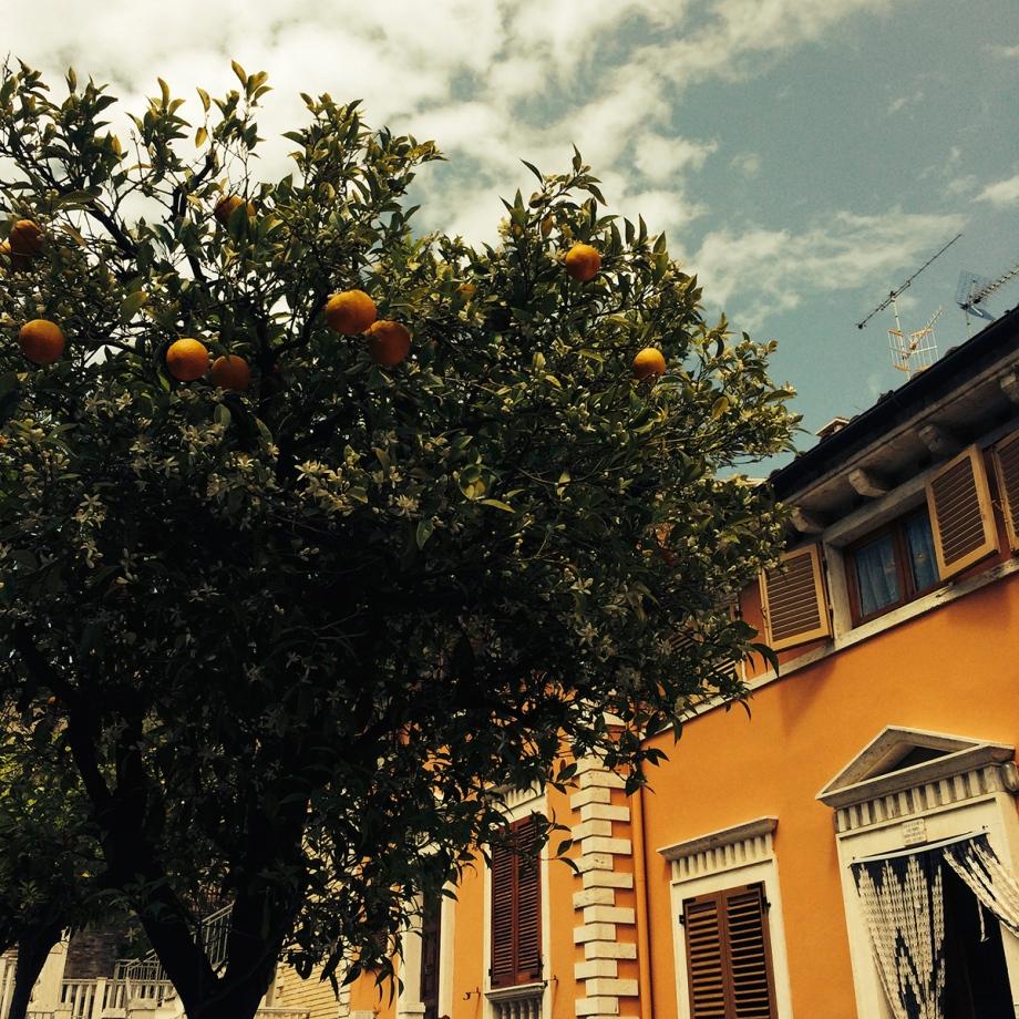 orangen3